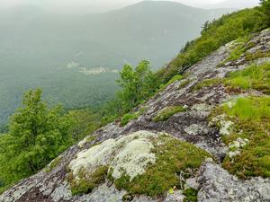 Moss and Lichens on Whiteside Mountain