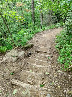 Log Steps on the Whiteside Mountain Trail