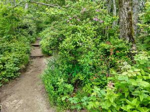 Lush Growth and Wildflowers on the Whiteside Mountain Trail