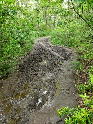 Mud Bog on the Whiteside Mountain Trail