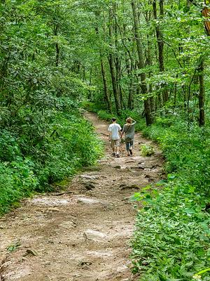 Hiking the Old Road on Whiteside Mountain