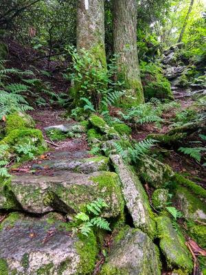 Mossy Climb on the Appalachian Trail