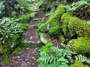 Mossy Steps on the Appalachian Trail