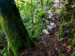 Mossy Tree and Outcrop on the Appalachian Trail