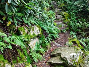 Verdant Steps on the Appalachian Trail