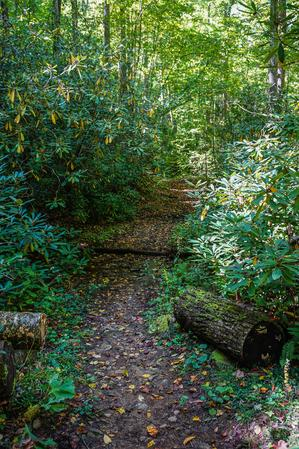Nicely Maintained Trail
