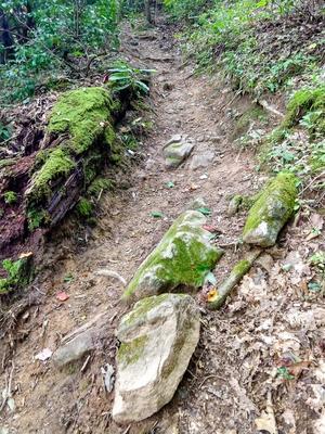Steep Section of Elk Pen Trail