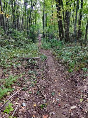 Strait Section of Elk Pen Trail