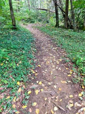 Elk Pen Trail Through Periwinkle