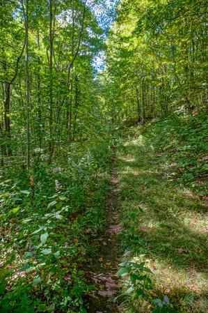 Laurel Gap Trail Near the End