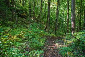 Boulder and Forest on the Upper Corner Rock Trail