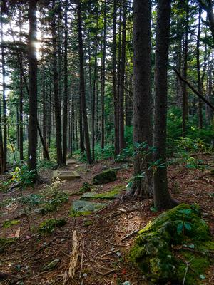 Enchanted Forest on the Buncombe Horse Range Trail