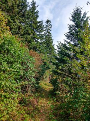 Opening in the Forest on the Buncombe Horse Range Trail
