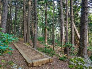 Well-Maintained Buncombe Horse Range Trail