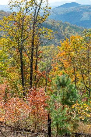 Fall Color on the Lower Slopes of Bald Knob