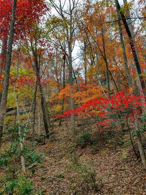 Fall Color above Toms Creek Falls