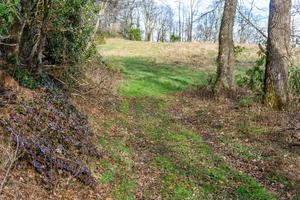 Second Wildlife Meadow on FS 482B