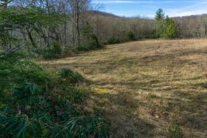 Edge of Wildlife Meadow