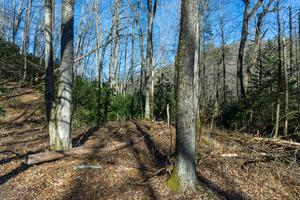 Bottomland on the River Loop Trail