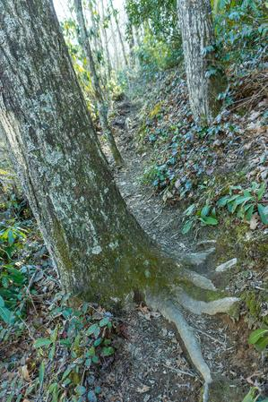 Sidehill Section of River Loop Trail