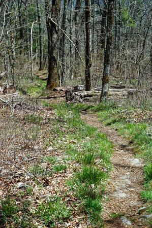 Grassy Trail on Chinquapin Mountain