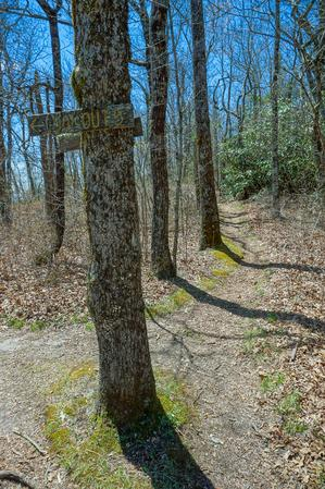 Lookout 5 Junction on the Chinquapin Mountain Trail