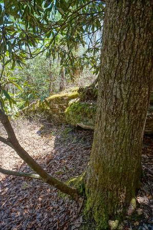 Rock Ledge and Tree on the Chinquapin Mountain Trail