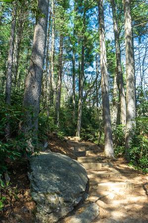 Tall Pines on the Glen Falls Trail
