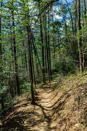 Glen Falls Trail thru Pine Forest