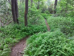 Twists and Turns on the River Loop Trail