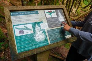 Fraser Fir or Red Spruce?