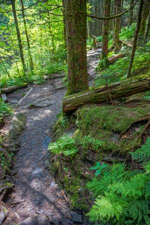 Stat of the Balsam Nature Trail
