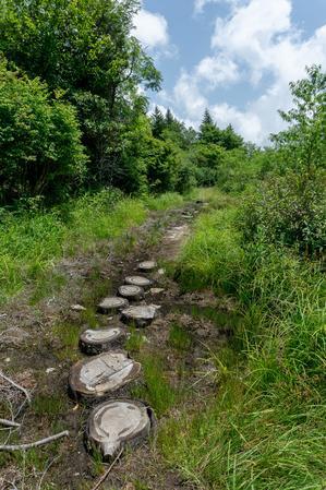 Log Steps on the Buncombe Horse Range Trail