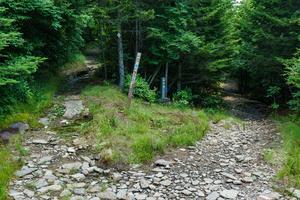 Mount Mitchell - Buncombe Horse Range Trail Split